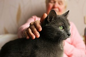 a woman in hospice care petting her new cat